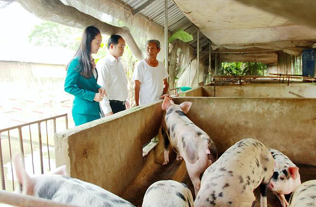 Kienlongbank giảm 30% lãi suất cho khách hàng chăn nuôi lợn